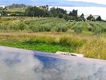 [pool & olives]