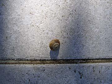[snail]