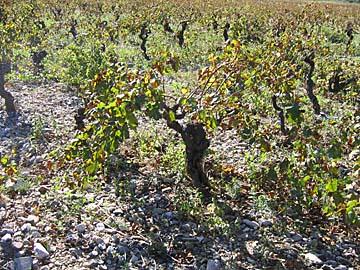 [lavender & vineyard]