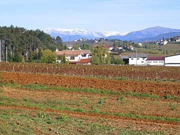 [new vineyards]
