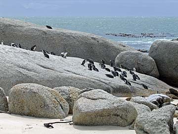 [penguins on rock]