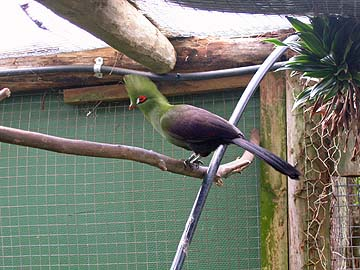 [spike-haired bird]