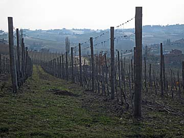 [vineyards in asti]