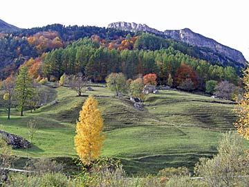 [grassy hills]