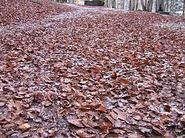 [autumn leaves]