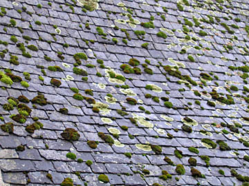 [moss-covered roof]