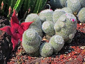 huntington garden cactus